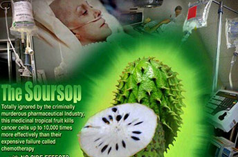 Finally Some Real Proof and a real story about Soursop Cancer Fights!!