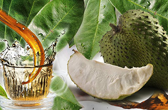 Cancer fights: Soursop Shows Strong Evidence in Studies